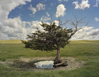 Andrew Moore, 'Homesteader's Tree, Cherry County, Nebraska', 2013