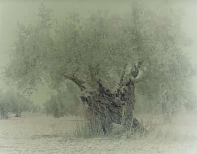 Ori Gersht, 'Olive 4', 2003