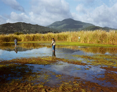 Larry Sultan, 'Corte Madera Marsh', 2009