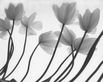 Firooz Zahedi, 'White Tulips', 1999