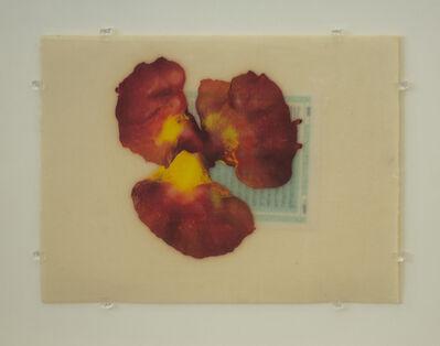 José María Sicilia, 'La luz que se apaga', 1997