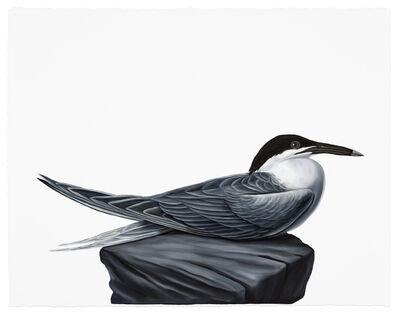 Shelley Reed, 'Tern', 2017