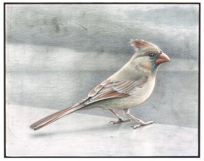 Eric Green, 'Colored Cardinal', 2012