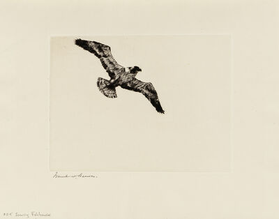 Frank Weston Benson, 'Soaring Fish Hawk', 1923