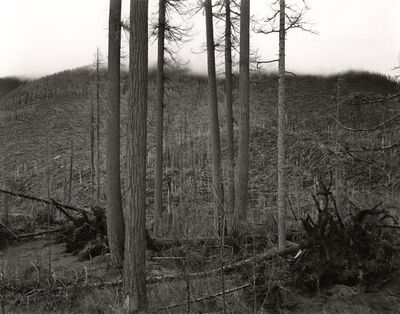 Emmet Gowin, 'Ryan Lake Area, Mt. St. Helens', 1981
