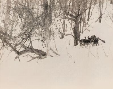 Yamamoto Masao, 'Nakazora (Deer in Forest), no. 1161', 2004
