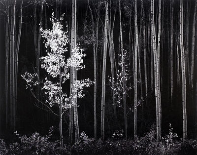 Ansel Adams, 'Aspens, Northern Mexico', 1958