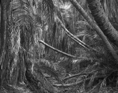 Garth Meyer, 'West Papua Agats, 5.3230°S, 138.0800°E', 2010