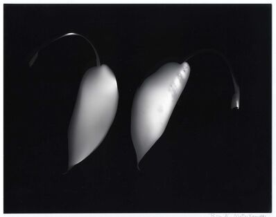 Ray K. Metzker, 'Untitled Photogram', 1991
