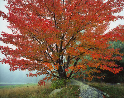 Christopher Burkett, 'Wild Red Maple and Fog, New Hampshire', 1989