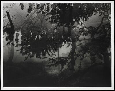 Erik Steffensen, 'Botanical Garden / Bronx Zoo XVI ', 2015
