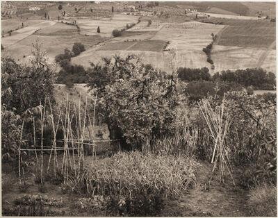 Emmet Gowin, 'Garden, Poggibonzi, Italy', 1979