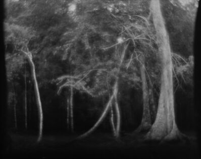 Linda Connor, 'Untitled (Trees)', nd