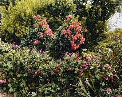 Stephen Shore, 'Red Chrysanthamums ', 2002