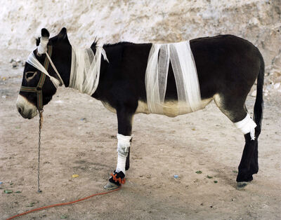 Servet Koçyigit, 'Mountain Zebra', 2008