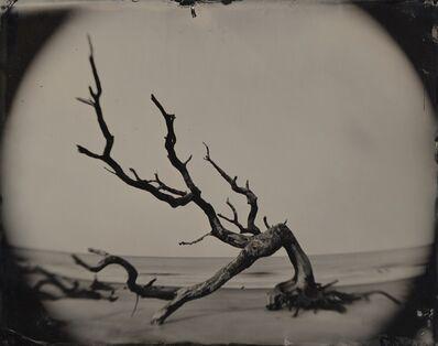 Joni Sternbach, '05.02.21 #8 Bent Tree / Jekyll Island', 2015