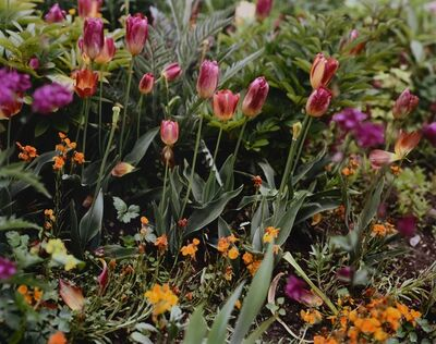 Stephen Shore, 'Tulips and Daisies', 2002