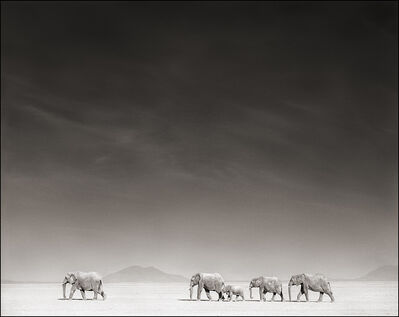 Nick Brandt, 'Elephants on Bleached Lake Bed ', 2008
