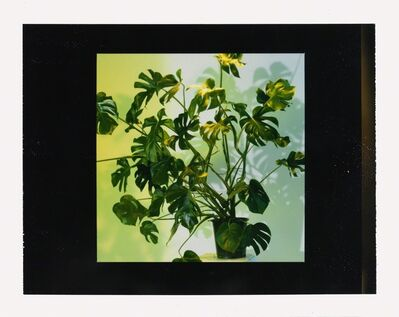 Miles Aldridge, 'House Plant - Study', 2006