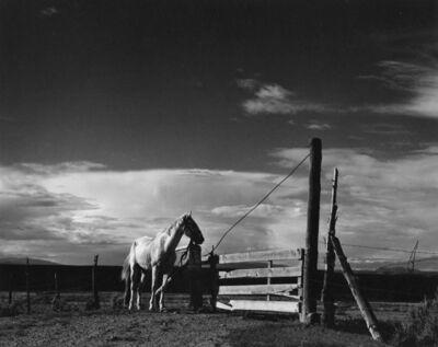 Paul Strand, 'White Horse, Rancho de Taos, New Mexico', 1932-printed circa 1971 by Richard Benson under the photographer's supervision
