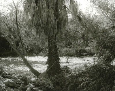 Mark Ruwedel, 'LA River/Glendale Narrows #31', 2017