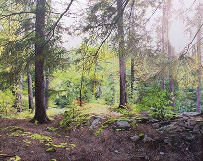 Julie Desmarais, 'Sous-bois au pied de la rivière (Parc des Chutes Dorwin, Qc)', 2019