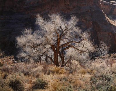 Christopher Burkett, 'Cottonwood and Light, Utah', 1987