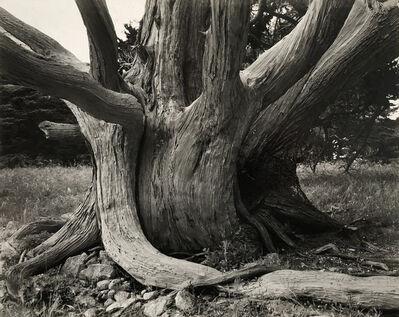 Sonya Noskowiak, 'Untitled (Tree Trunk)', 1938