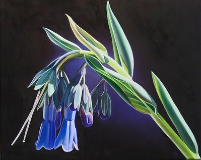 "Dyana Hesson, '""Something Blue"" Macdougal's Bluebell, Hardscrabble Road, Arizona', 2020"