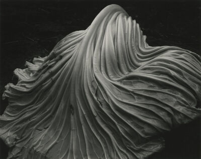 Edward Weston, 'Cabbage Leaf (39V)', 1931