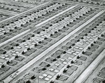 William Garnett, 'Mass Production Housing, Lakewood, CA', 1950