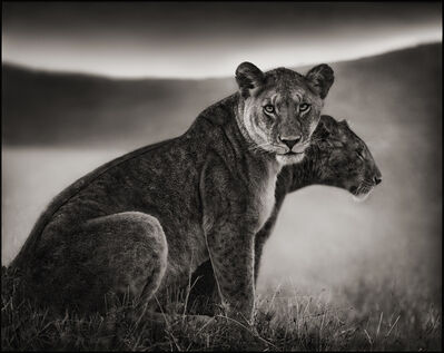 Nick Brandt, 'Sitting Lionesses, Serengeti', 2002