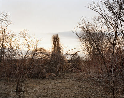 Joel Sternfeld, 'Looking North from a Cane Break, Near Walnut Trees Road, Towards Nook Road, on a Late March Afternoon, The Meadows, Northampton, Massachusetts, March 2007', 2007