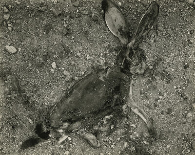 Frederick Sommer, 'Jackrabbit', 1938