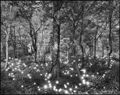 Tokihiro Sato, 'Photo Respiration Trees Shirakami #10', 2008