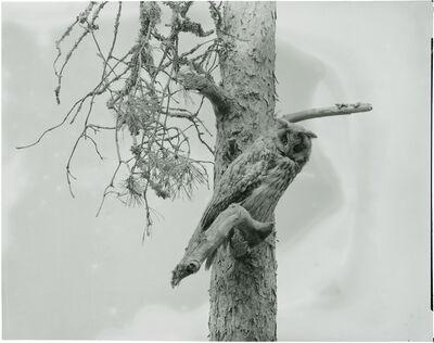 Gerard Byrne, 'Large eared Owl', 2018