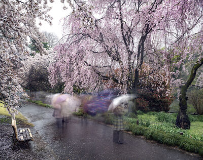 Matthew Pillsbury, 'Hanami #18, Shinjuku Gyoen, Thursday April 3rd', 2014