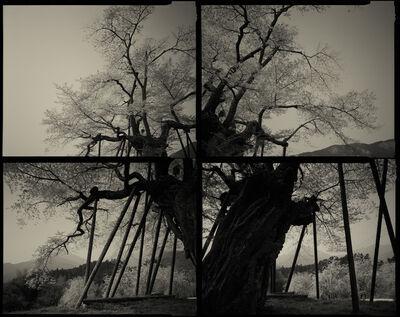 Keiichi Ito, 'Hongo_SAKURA (C1144)', 2018