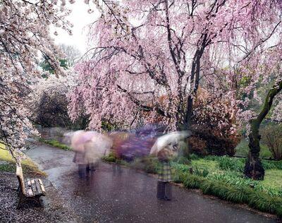 Matthew Pillsbury, 'Hanami #18, Shinjuku Gyoen, Thursday, April 3rd', 2014