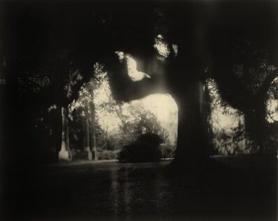 Sally Mann, 'Deep South, Untitled (Scrim)', 1998