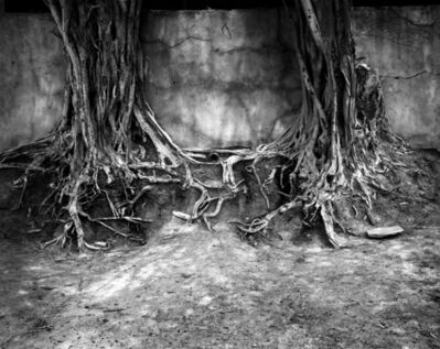 Ian van Coller, 'Roots', 1998
