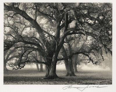 Roman Loranc, 'Two Hearted Oak', 2000