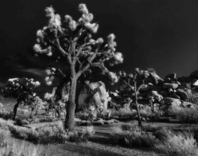 Cody S. Brothers, 'Pinhole Photography; 'JTree2016'', 2016