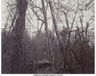 Linda Connor, 'Woods (Belmont, Massachusetts) and Lightening (Nevada) (two photographs)', 1978; 1976