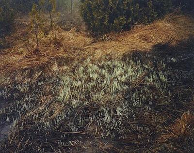 Edward Burtynsky, 'Grasses, Bruce Peninsula', 1981