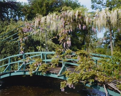 Stephen Shore, 'Wisteria by the pond', 2002
