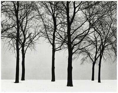 Harry Callahan, 'Chicago (Trees at Lake Shore)', ca. 1950