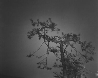 Huang Rui, 'Water in Pine 4', 2000