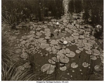 George Tice, 'Aquatic Plants #1, Saddle River, New Jersey', 1967