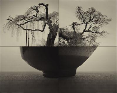 Keiichi Ito, 'Yoritomo - SAKURA (C934)', 2017